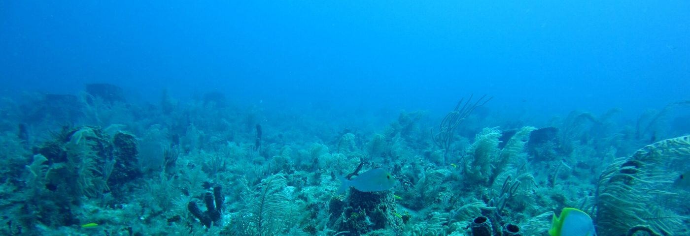 Seismic Imaging with Ocean-Bottom Nodes (OBN): Mirror Technique